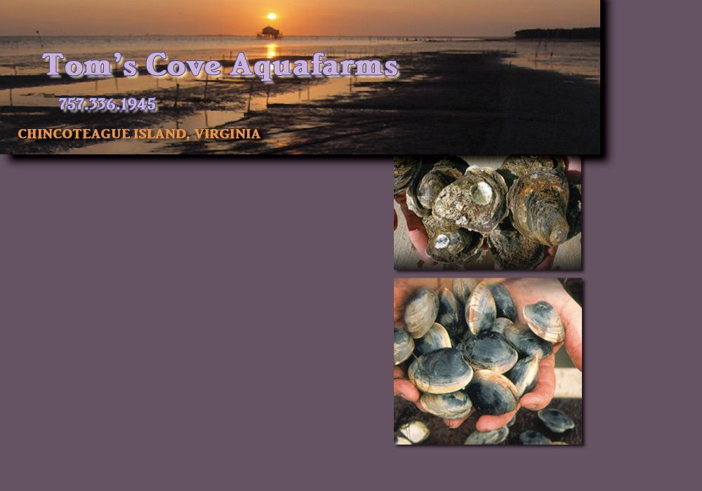 composite image of clams,oysters and sunset